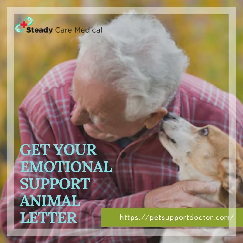 Get Your Emotional Support Animal Letter And Improve Social Interaction Emotional Support Animal Emotional Support Animal Letters