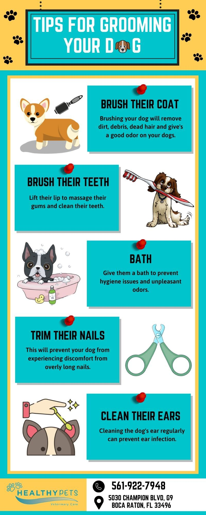 Are You Looking Pet Groomer Near Boca Raton Then Healthy Pets Veterinary Care Will Be The Perfect Choice For You We Offer An Healthy Pets Veterinary Care Dead Hair