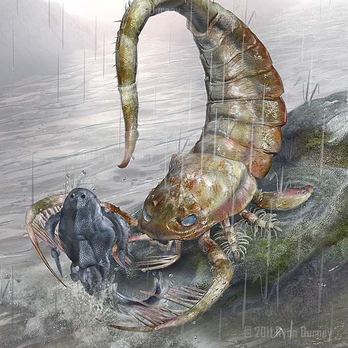 Eurypterid, Ordovician Permian, Arthropoda (chelicerata