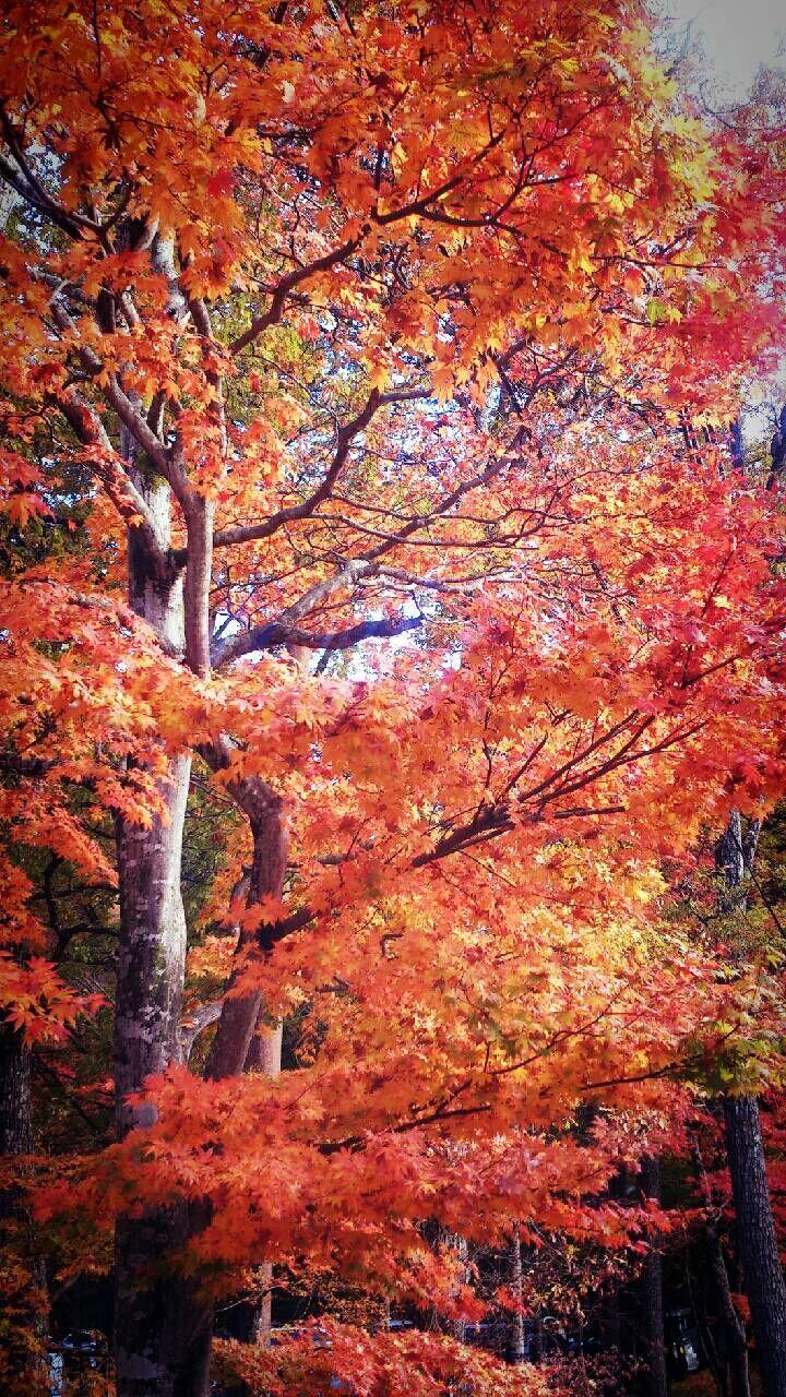 Fire Dance Autumn Beauty Abstract Artwork Fall