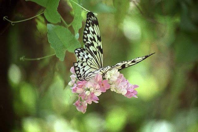 через объектив: Красивые фотографии бабочек   Обои с ...