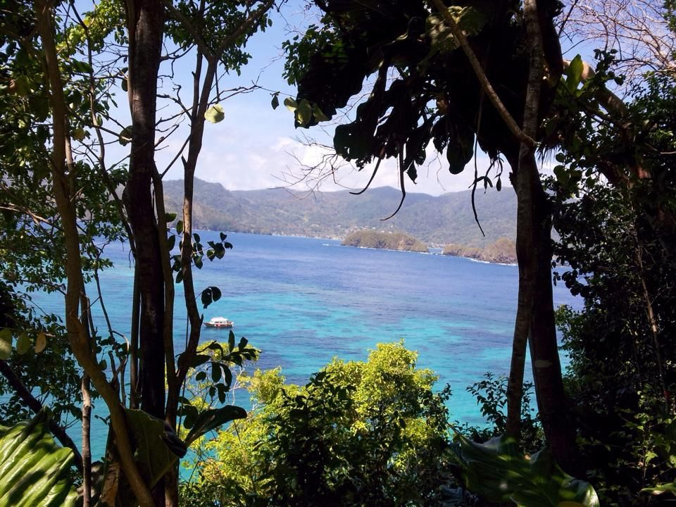Gorgeous glimpse of blue waters between the trees. Can't beat classic #Caribbean views!