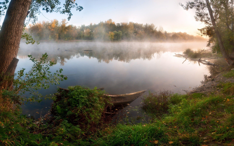 maisema, puut, metsä, pilvet, vesi, järvi, sumu, ruoho, kasvit, heijastus, nature