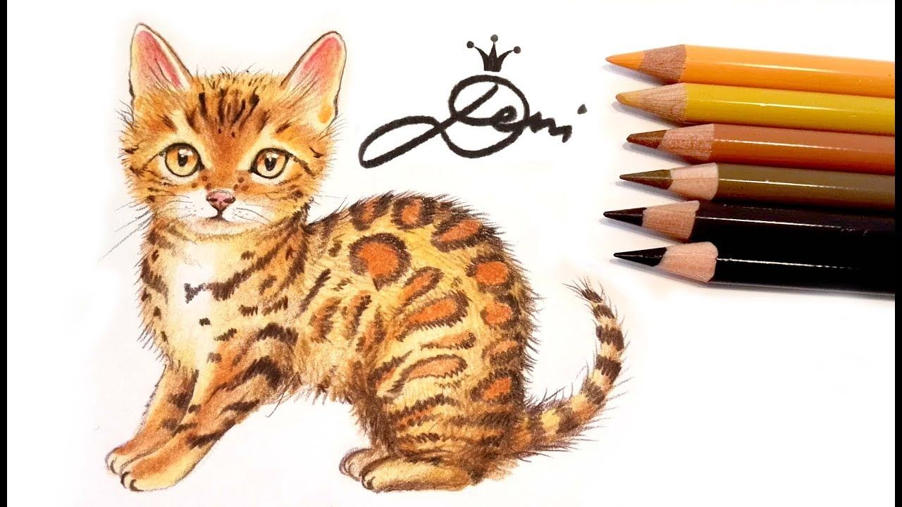 Pin By Brenda Markham On Cat Drawing In 2020 Baby Animal Prints