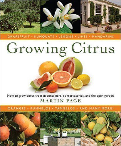 846f1e538d83396ae8400381a201f50c - Growing Citrus The Essential Gardener's Guide
