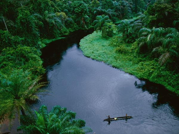 Rain Forests | See best ideas about Congo and Canoeing