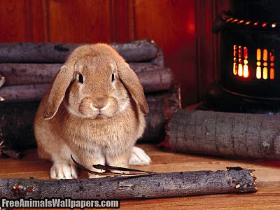 I suppose I'll have to bunny hop
