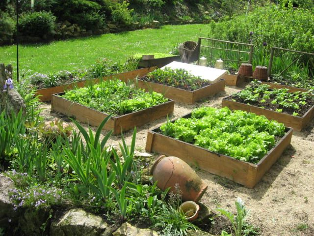 Veggie patch outdoors i need to make a veggie patch for - Trouver de l or dans son jardin ...