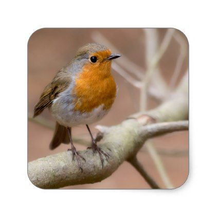 little red robin square sticker christmas stickers xmas eve custom holiday merry christmas - Is Red Robin Open On Christmas