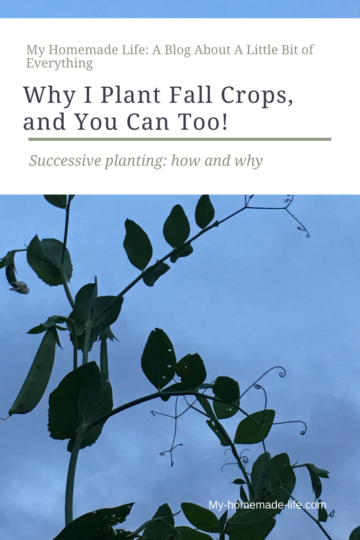 How To Plant Fall Crops, Increase Yield, Self Sufficiency, And Successive  Planting