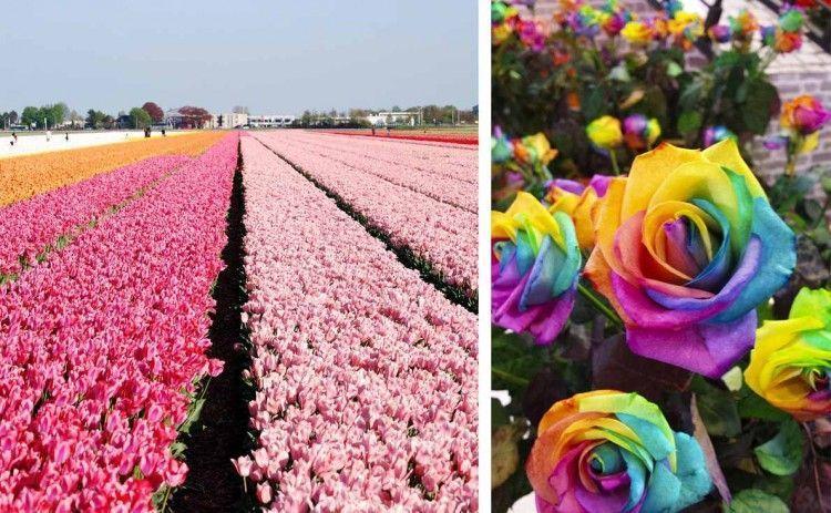 C mo decorar en primavera los jardines de keukenhof en - Jardines de holanda ...