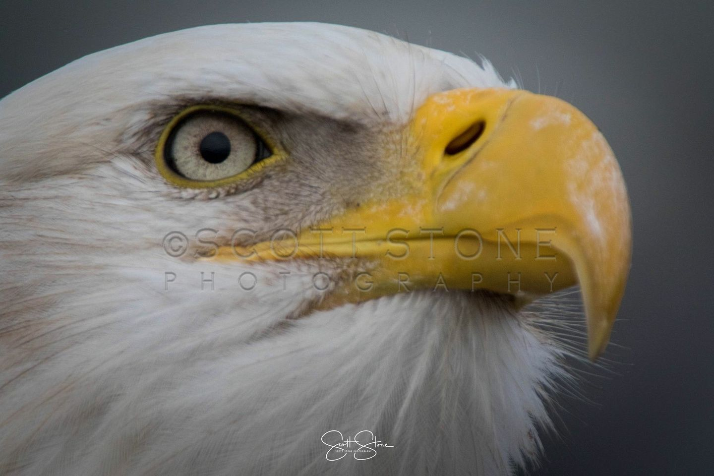 The Eye Of The Eagle Is Powerful And Draws You In You Can