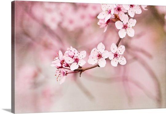 Pink Blossoms Cherry Blossom Wall Art Pink Blossom Pink Art