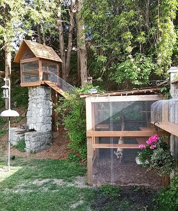Outdoor Cat Jungle Gym Diy cat enclosure, Outdoor cat