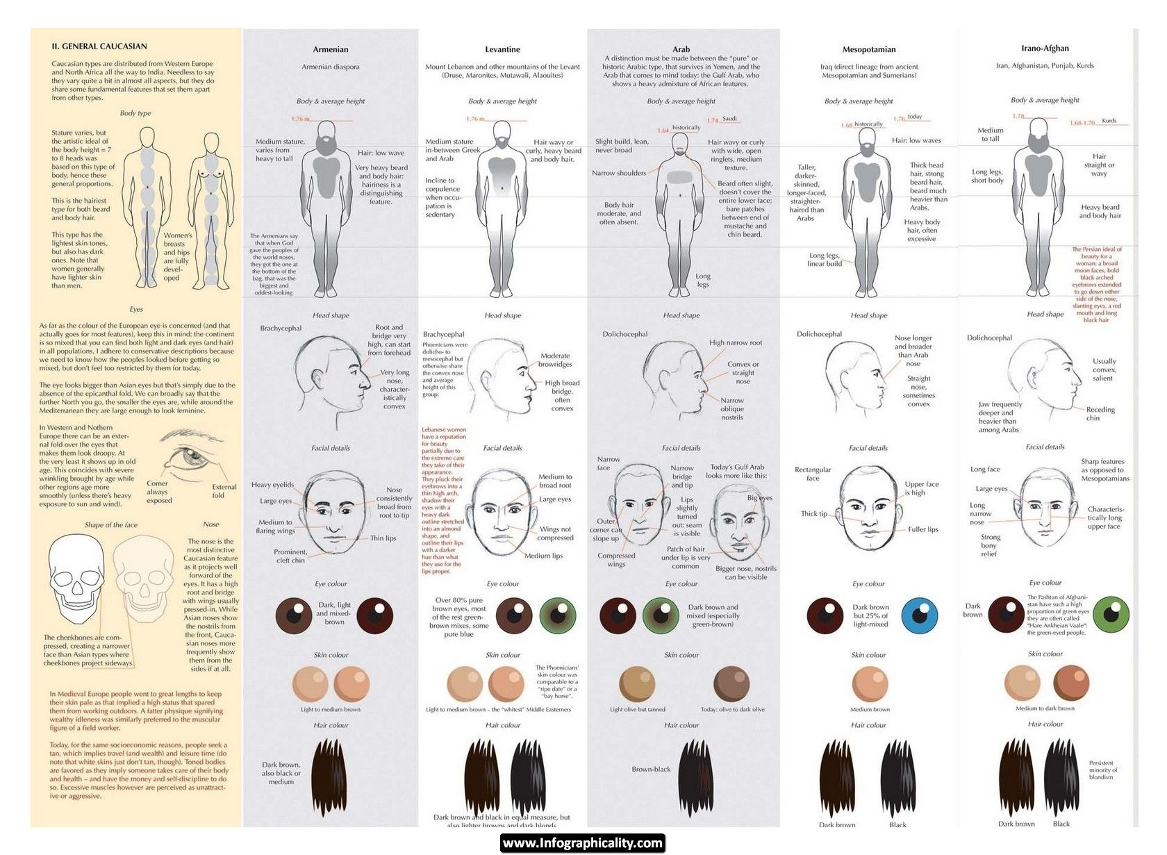 Drawing Caucasians Infographic