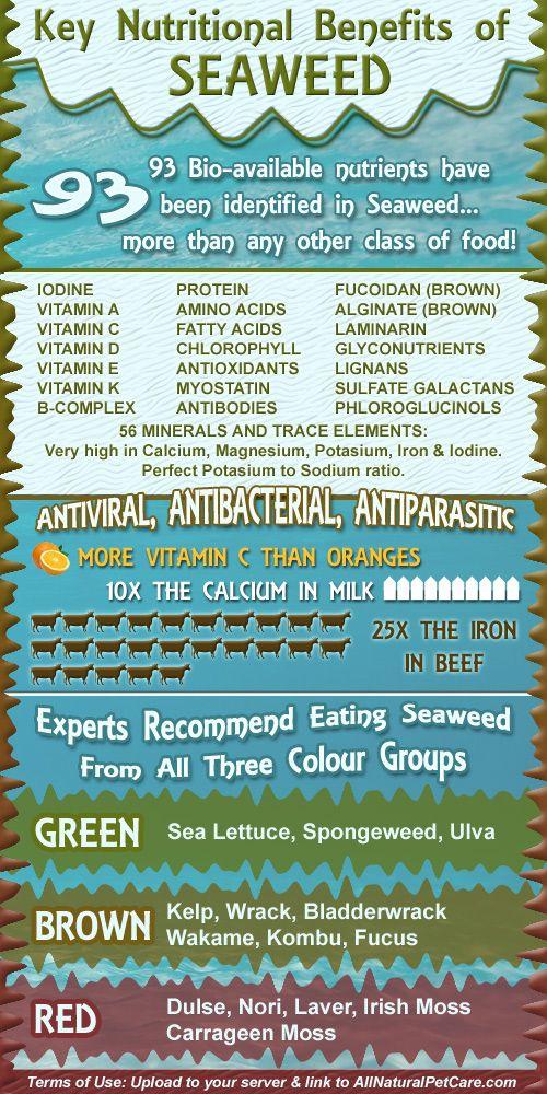 Health Benefits of Seaweed | Kodjoworkout