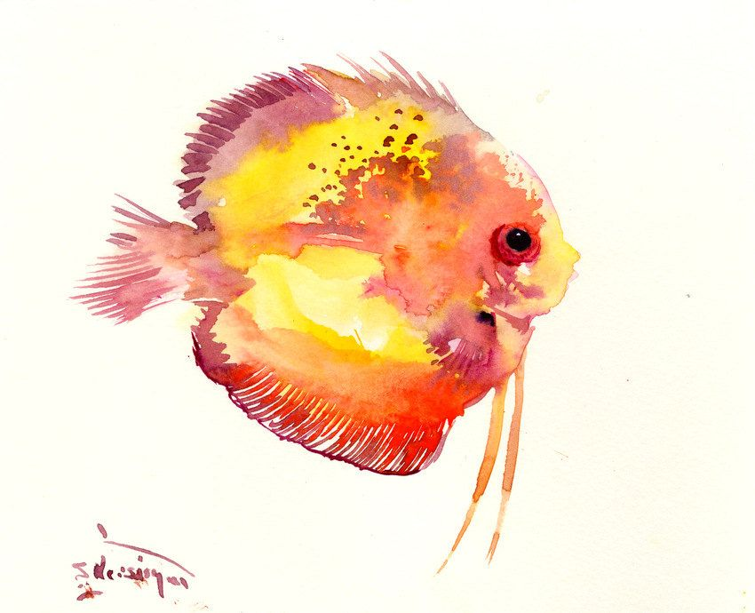 Yellow Discus Fish Red Yellow Flame Original Painting 8 X 10 In