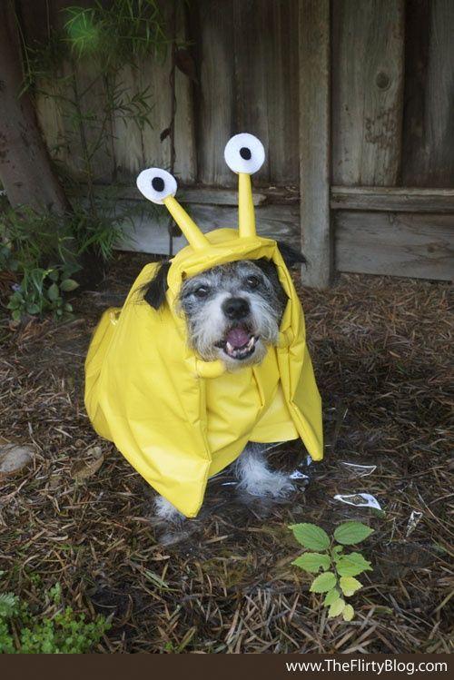 Banana Slug Slugs Cutest Dog Ever Dog Halloween Dog