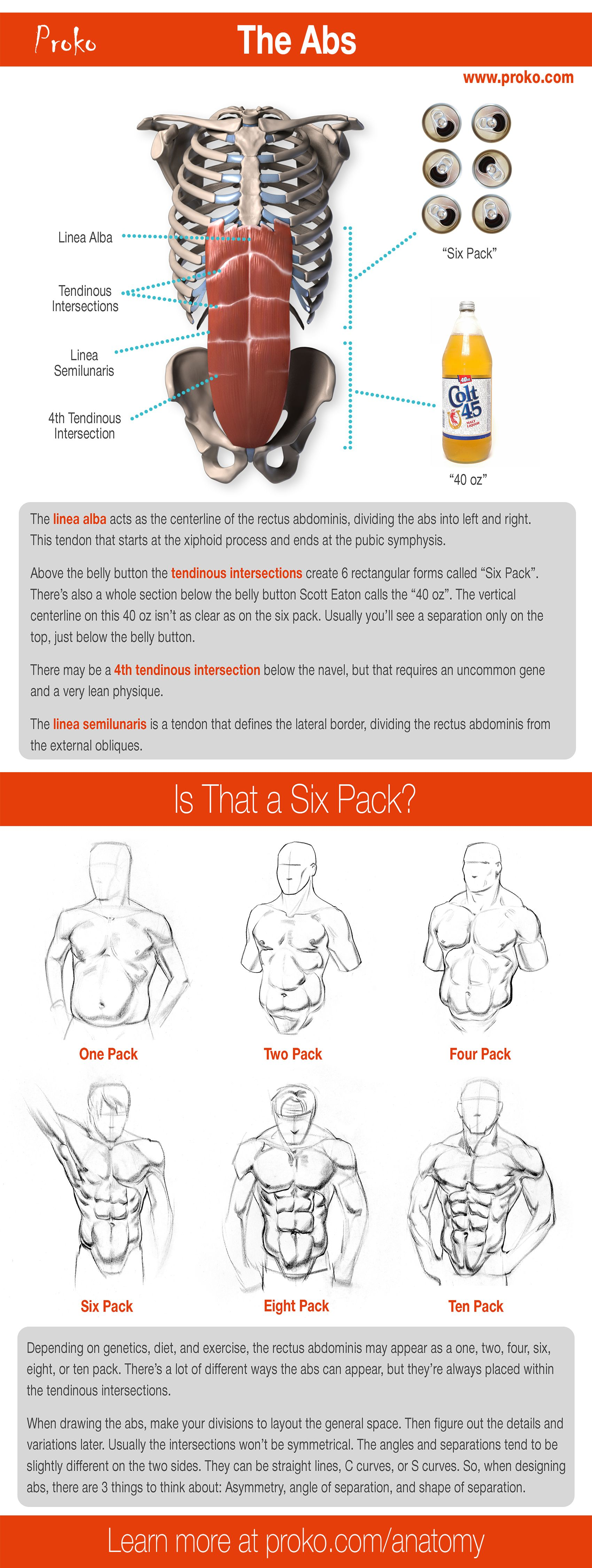Anatomy of the Human Body for Artists Course   Anatomy for Artists ...