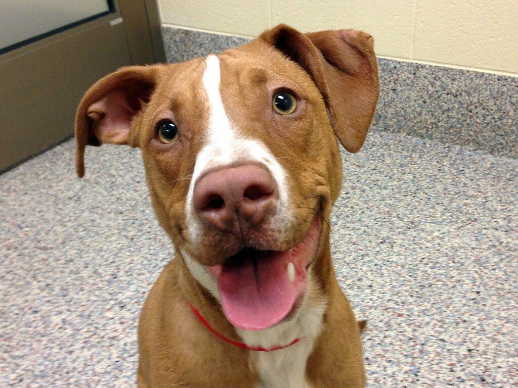 John Clark Humane society, Dogs up for adoption, Animals