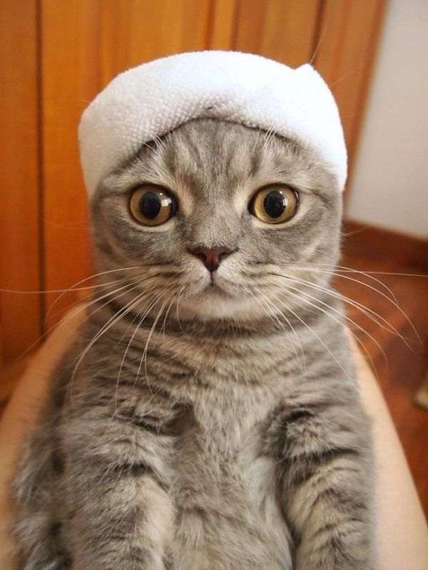 Hat-Wearing Cat Finds Itself In A Humorous Photoshop Battle