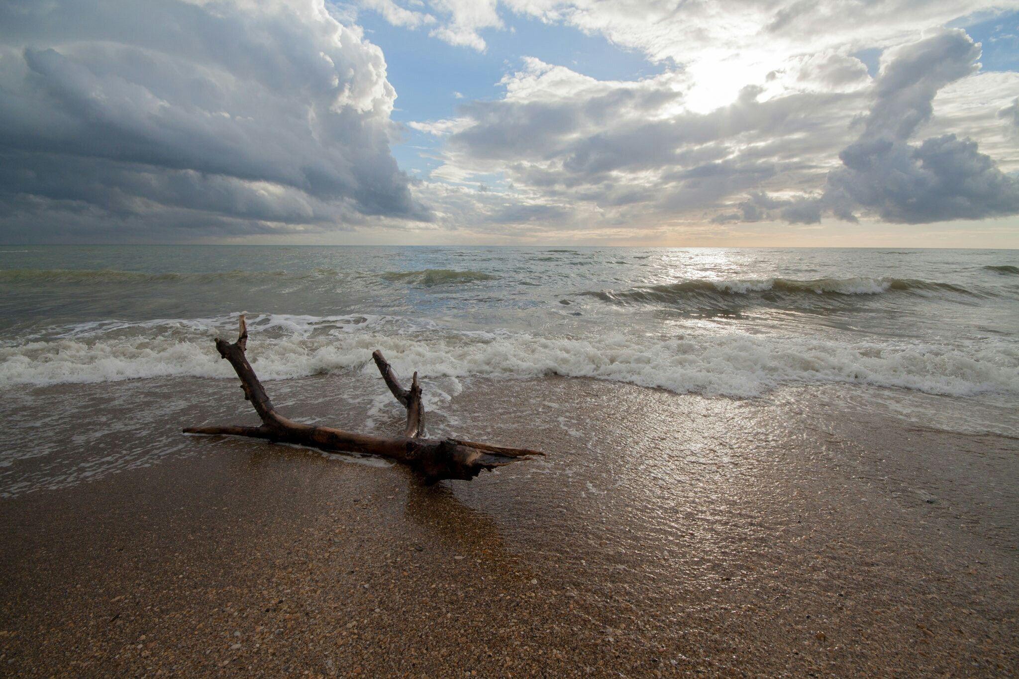 Driftwood - Winter beach