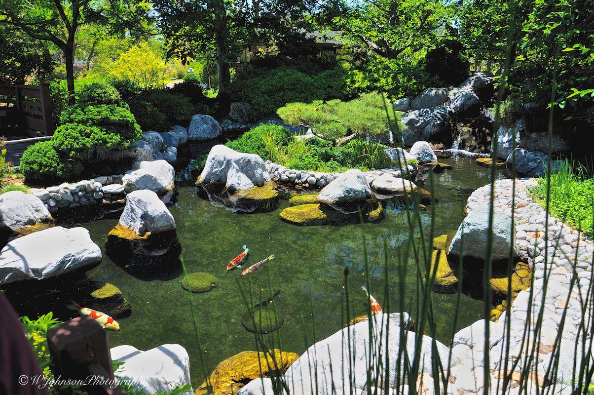 japanese friendship garden koi pond balboa park san diego san