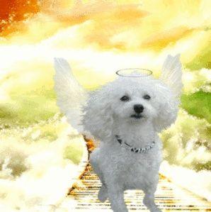 Heaven Wings Heaven Wings Regenboogbrug