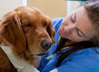 I am working towards being a veterinary assistant.  I think I would really love working with animals, helping them and comforting them. :o)