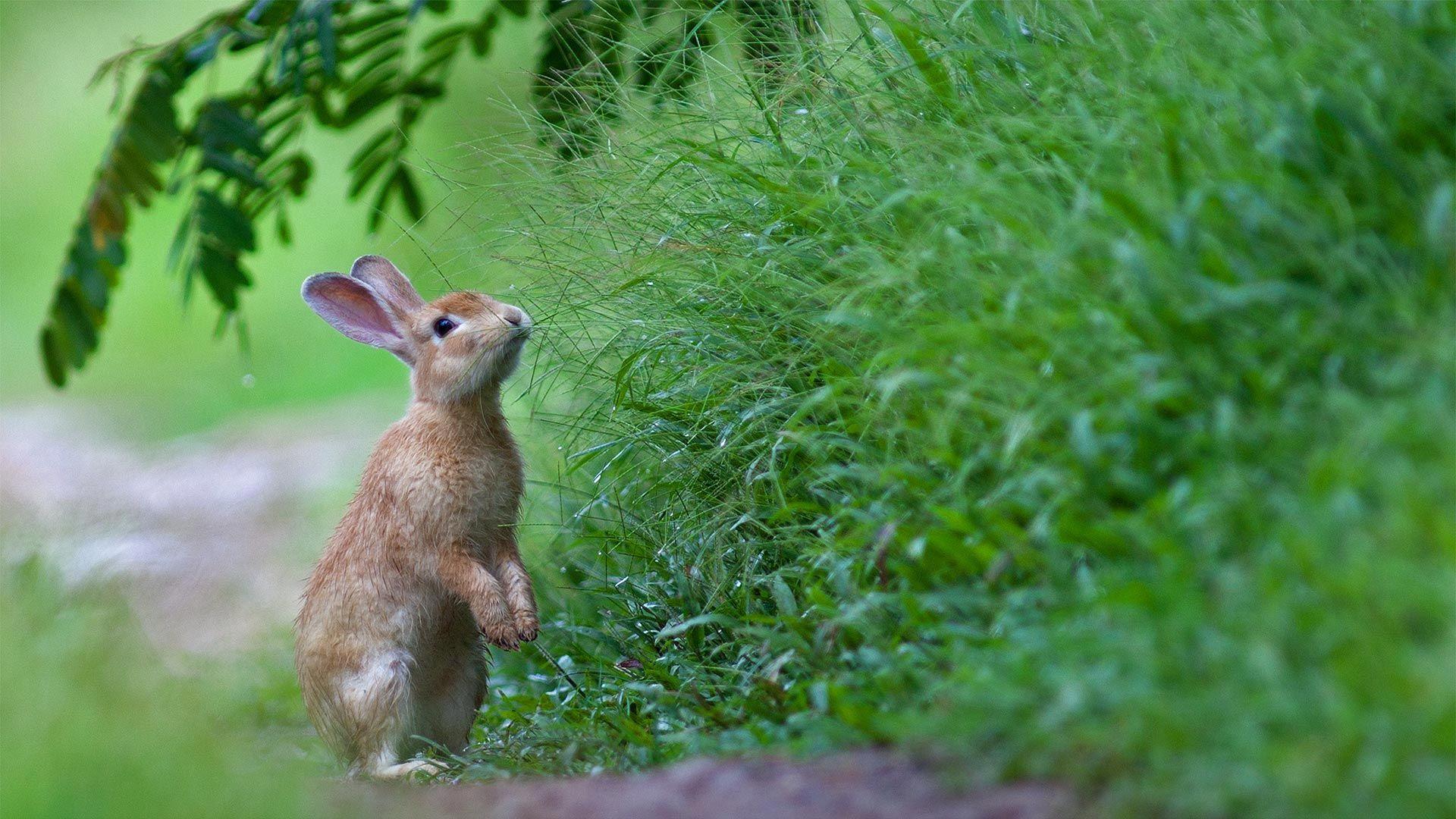 Pin by Adriano Ferreira on Bing Daily Photo Rabbit