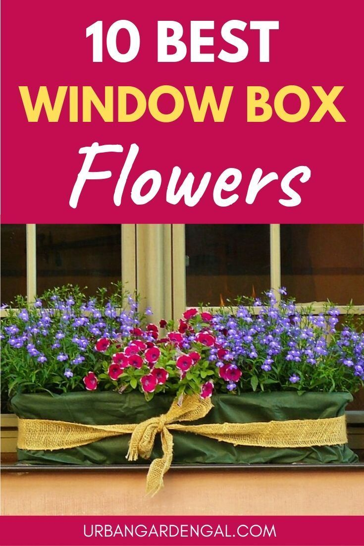 Window box flowers - Here are 10 of the best flower plants for window boxes to brighten up your home. #flowers #flowergarden #flowergardening #windowbox #gardening