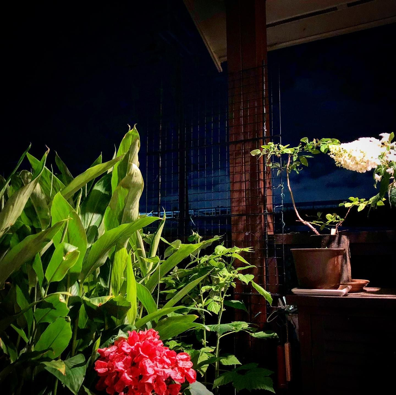 風呂上がりにヴェランダに出ていっぷく。 気持ちええなーと。 . . . ▲一日・一ハワイ ブログへはプロフィールのリンクからどうぞ!! . #ハワイ #アロハ #ハワイ好きな人と繋がりたい #hawaii #aloha #lovehawaii #hawaiilove #ハワイ旅行 #オアフ島 #ハワイ島 #マウイ島 #カウアイ島 #ラナイ島 #モロカイ島 #ビッグアイランド #ビール