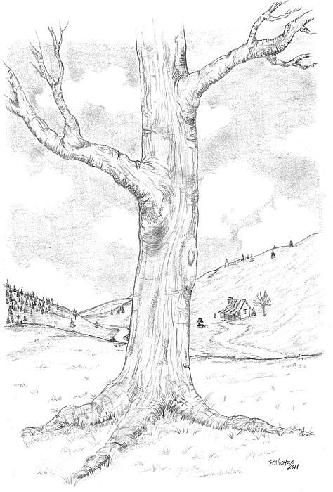 Pencil sketch tree canvas print canvas art by paul nichols