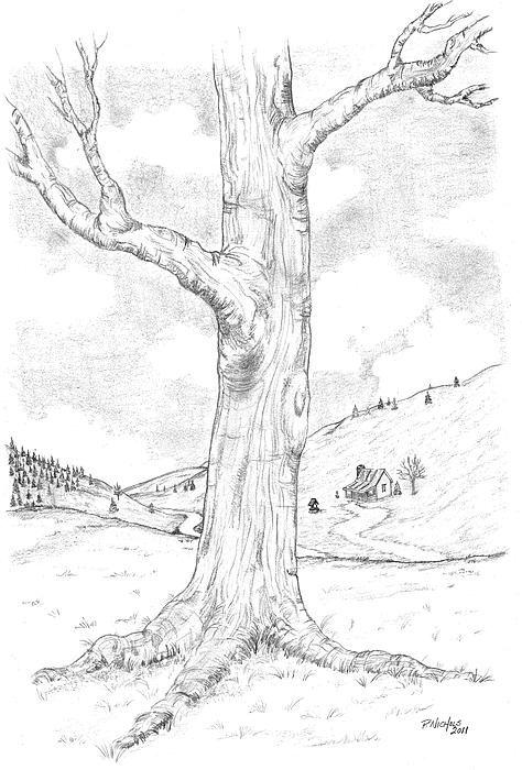 Oak Tree Sketch Landscape Drawings Tree Drawings Pencil Tree Painting