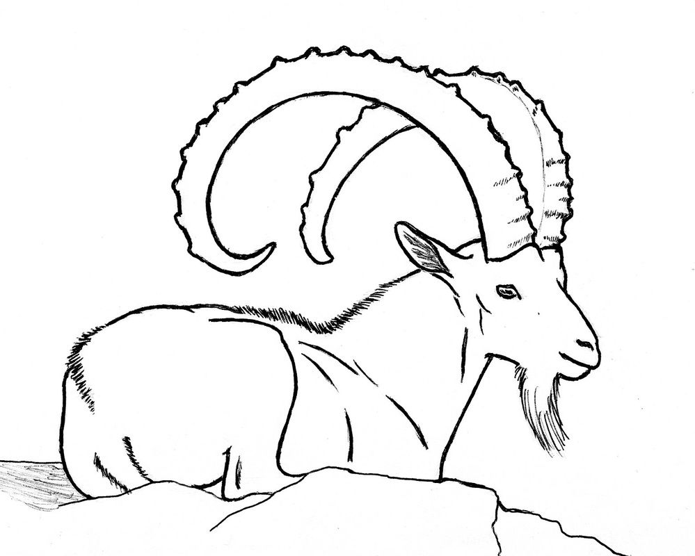 Other Goat Drawings - Rubystar Dairy Goats | Research ...