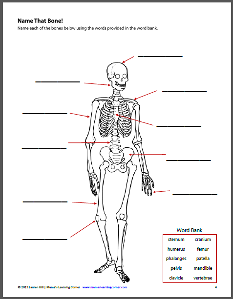 The Human Body Worksheet Packet for 1st-3rd Graders | School | Human ...