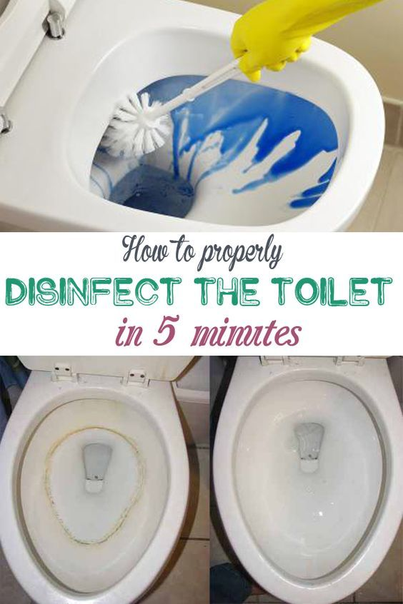 Toilet Seat Gathers Many Germs And Dirt Being A Place Where Bacteria, Fungi  And Lime Water Combine Disastrously. See How To Properly Wash And Disinfect  The ...