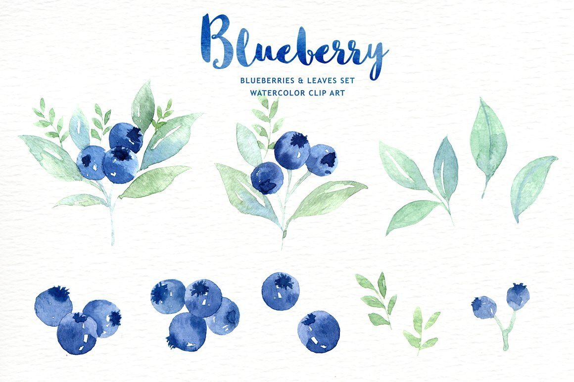 Photo of Blueberry Watercolor Clipart by everysunsun on Creative Market