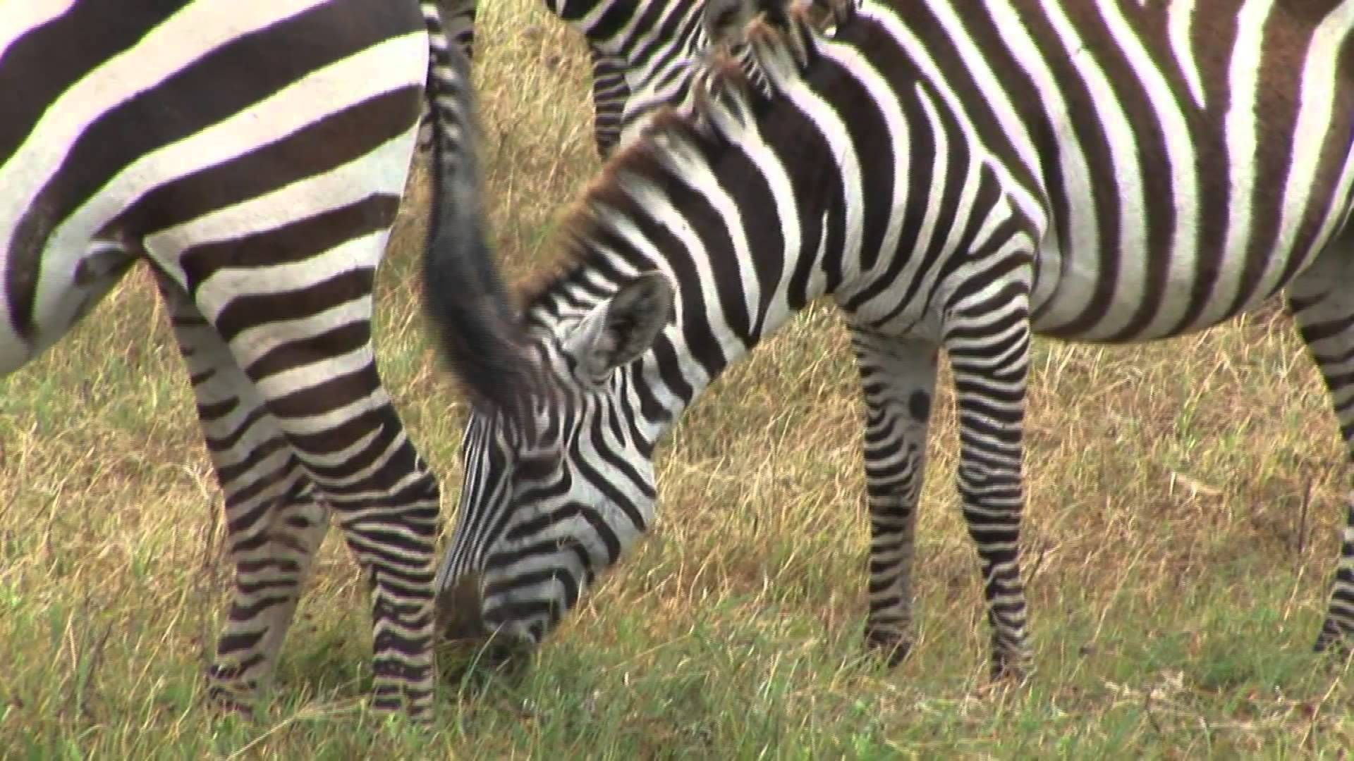 Ngorongoro Conservation Area - Tanzania - Travel & Discover #nature #nationalpark #africa #tanzania #conservation #wildlife