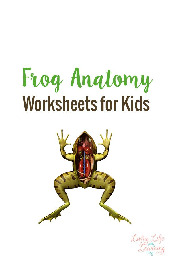 Frog Anatomy Worksheets for Kids | Worksheets, Anatomy and Frogs