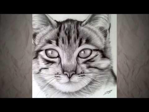 Comment dessiner un chat - Speed drawing - Dessin réaliste ...