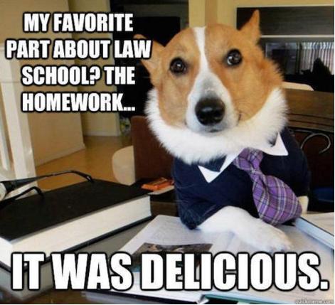 #LawyerDog ate your homework #Meme #Dog #Corgi | Humor ...