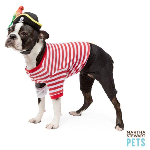Martha Stewart Pets Pirate Halloween Costume Costumes Petsmart Martha Stewart Pets Pirate Halloween Costumes Halloween Animals