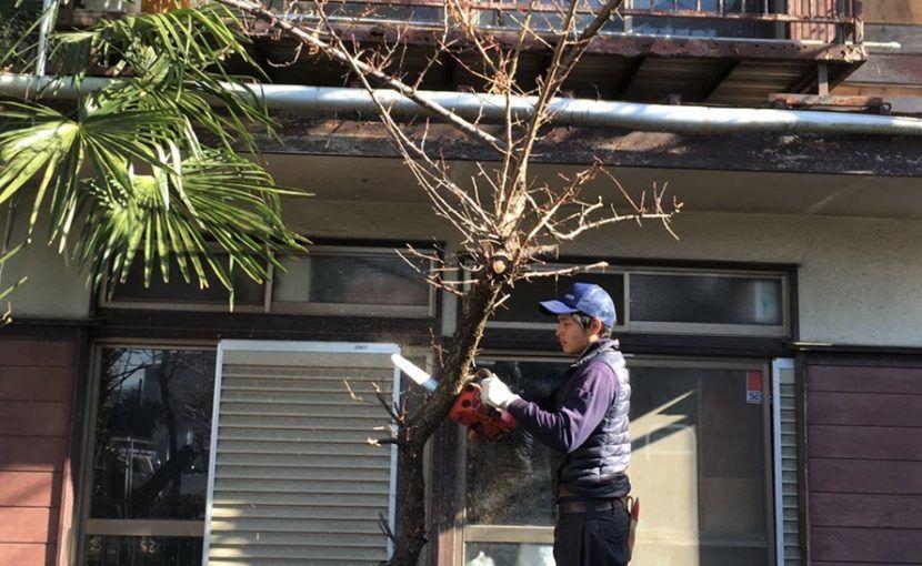 ブログ一覧ページ 八王子の造園 植木 庭のお手入れ 株式会社