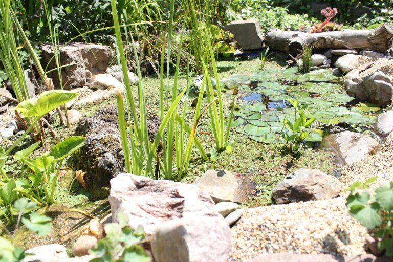 Wie Ich Die Algen In Meinen Teichen Los Wurde Dragonflys Gartenblog Dragonflys Gartenblog In 2020 Algen Teich Haus Und Garten
