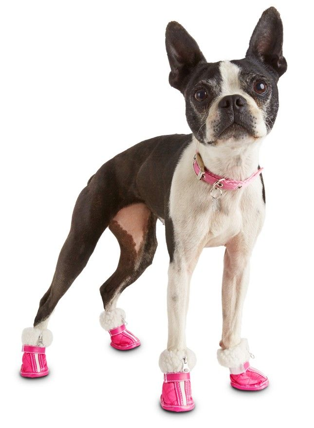 15 Winter Must-Haves for Dogs   Dogs, Dog clothes, Dog rain boots