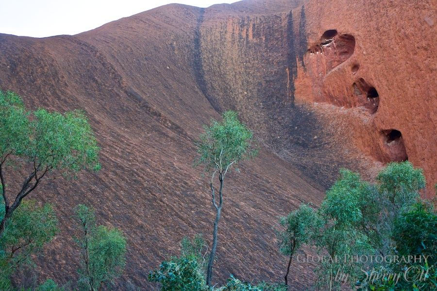 Green trees against the red backdrop of Uluru