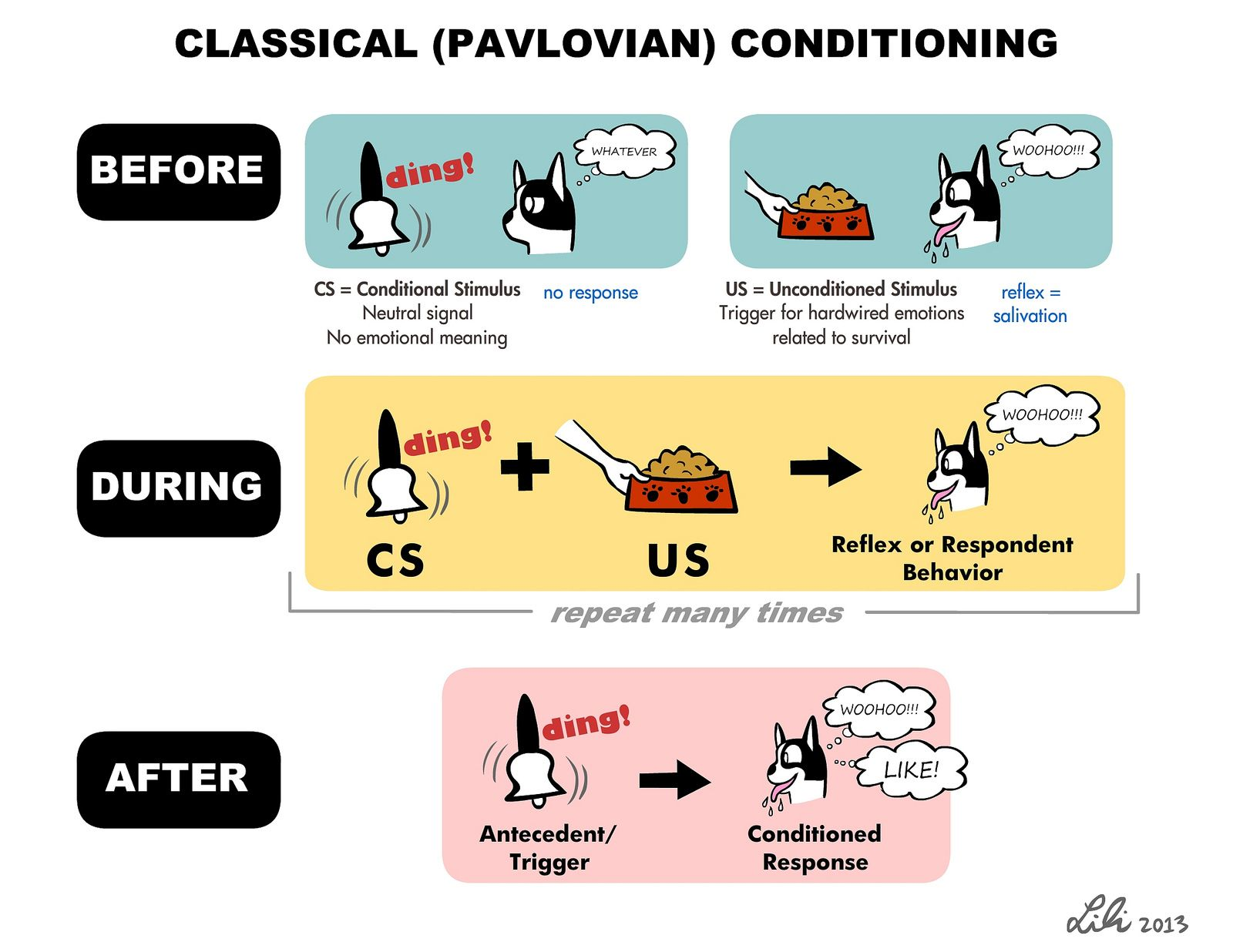 Classical Conditioning Operant Conditioning Dog Clicker