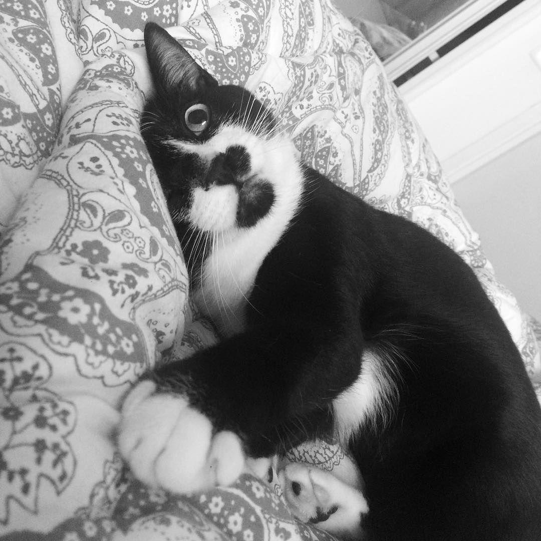 Meu amorzinho Luna  #catofinstagram #cats