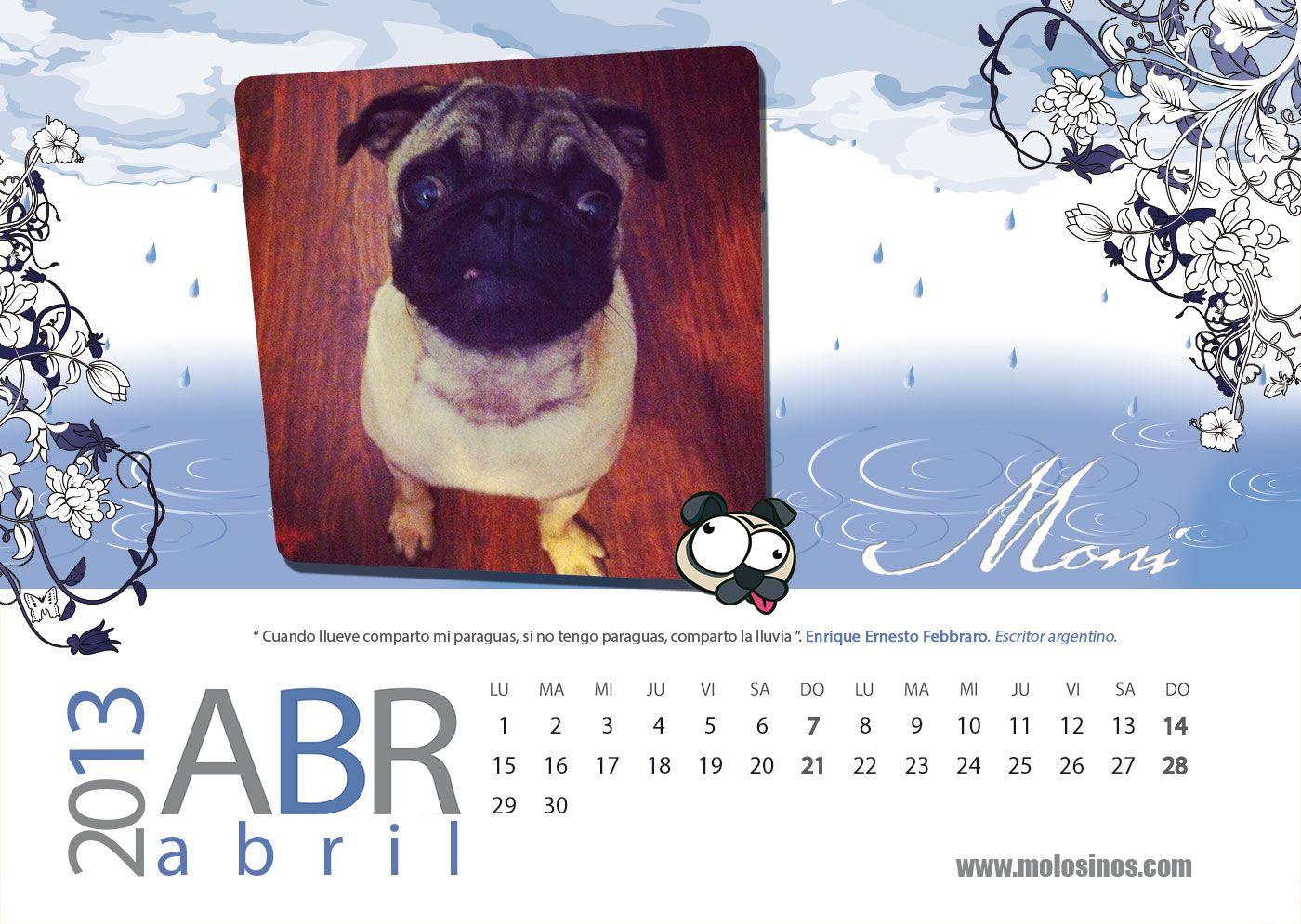 Carlino Del Mes Moni Miss Abril Foto Ganadora Del Concurso De Fotos Para El Calendario 2013 En Molosinos Carli Pugs Animal De Compañia Concurso De Fotos
